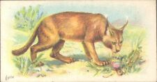 Players - Wild Animals of the World, 'issued by', no 'branch' - Lynx