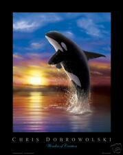 "NEW Killer Whale III 16x20"" Fine Art Print -Dobrowolski"