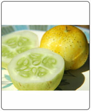 Cucumber Lemon 100 Seeds Heirloom Vegetable