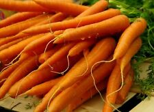 ☺1000 graines de carotte de colmar a coeur rouge 2