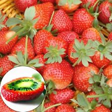 100pcs Rare Strawberry Kiwi Seeds Organic Sweet Fruit Seeds Of Perennial Garden