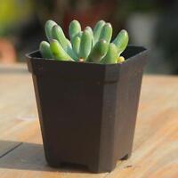 5pcs Mini Square Plastic Plant Flower Pot Home Office Decor Planter Black Dcql