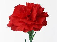 30 Seeds of Marigold Chabaud Red / marigold florists / marigold Common
