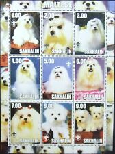 Sahalin ( Local Post,Russia )-Maltese Dogs,1 M/Sh,2002,MNH,PLR 73