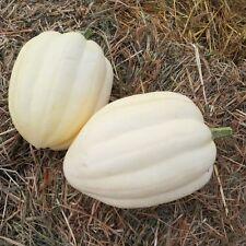 Pumpkin CREAM OF THE CROP-Pumpkin Seeds-SMALL AREA,BIG PRODUCER-16 SEEDS.