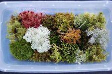 Fresh Live Moss Variety Pack! 1 QUART bag for Terrarium