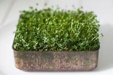 Le sementi biologiche VERDURA-Suffolk Erbe CALABRESE VERDE germinazione PITTORICA Pack