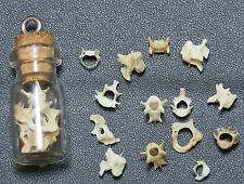 Mole vertebrae bones in a glass vial pendant. Wiccan Pagan Witchcraft plus bag