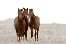 BEAUTIFUL WILD HORSES * LARGE A3 SIZE QUALITY CANVAS PRINT