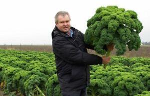 Seeds Kale Bush Cabbage Dinosaur Giant Vegetable for Planting Organic Ukraine