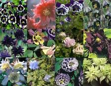 BRAND NEW: UNIQUE & VERY SPECIAL AQUILEGIA SELECTION (SEED)