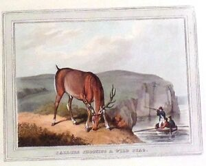 """Alken's Sporting Print- """"SHOOTING A WILD STAG"""" - Hand-Colored Aquatint - 1813"""