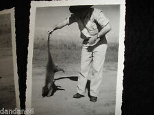 old 1940s Play w Anteater by the tail in road b&w neat photo w abstract shadow
