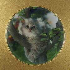 Out On A Limb Plate Nancy Matthews Grey Gray Kitten Cat Tree Franklin Mint Cute!