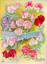 1898 Maule's Sweet  Peas Vintage Flowers Seed Packet Advertisement Poster