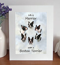 "Boston Terrier 'Life is Merrier' 10"" x 8"" Mounted Print Picture Dog Pet Fun Gift"
