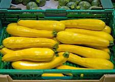 Zucchini - gelb - 10 Samen -Super Ertrag-