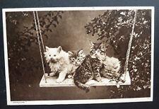 "Old Cat Postcard,Persian Kittens- "" Swingtime"""