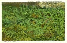 Waveland,IN. A Bed of Wild Ferns...The Shades