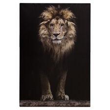 Keilrahmen Bild Wandbild Löwe Safari Afrika 78x118 cm