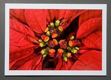 Nobuyoshi Araki Limited Edition Photo 24x17cm Flower Rondo Still Life Stilleben
