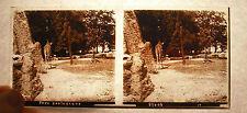 Plaque photo stéréoscopique parc zoologique girafes Zoo 13cm 6cm giraffes