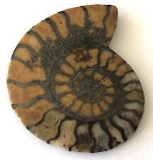 60.43 KT Ammoniti Fossil Naturale Sfuso Gemma Grande Esemplare