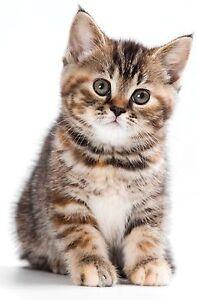 Sticker decal wall fridge children room animal decorate baby cat kitten