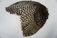 1 Juvenile Eastern Wild Turkey #1 Whole Wing, Left