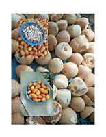 Areca Catechu Organic 100% supari  ( Betel Nut ) From Sri Lanka Free Ship