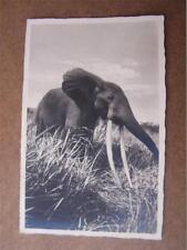Big Game Safari Africa Elephant