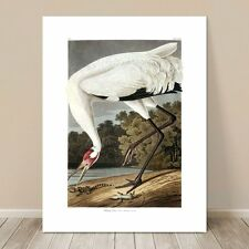 "FAMOUS SEA BIRD ART ~ CANVAS PRINT  16x12"" ~ JOHN AUDUBON ~ Hooping Crane"