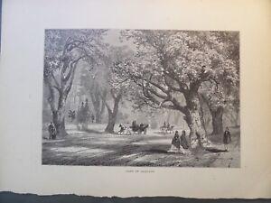 Oak Trees Of Oakland California Antique Engraving 1872