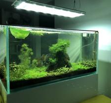 New listing Big Portion Christmas moss - Tropic Aquatic Live Freshwater plants.