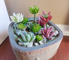 Set of 13 Artificial Succulents Flocking Finger And Yacons Plants