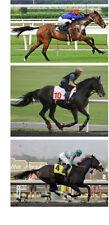 Horse Racing Edible Images ICING Sheet A4