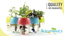 Aquaponic Aquarium for Betta Fish Tank Water Garden Planter Natural Ecosystem Pink