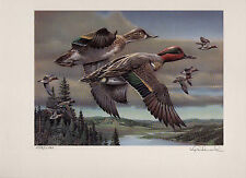 Oregon #9 1992 Duck Stamp Print Green Winged Teal by Kip Richmond C.E.