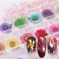 Real Dried Flowers Decals Nail Art Decorations 3D Uv Gel Acrylic Tips 12 Colors