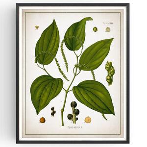 Black Pepper Botanical Print Spice Kitchen Decor Vintage Poster Art Picture Gift