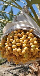 2021 PRE ORDER Barhi Dates Yellow Dates. 8 Pound Box