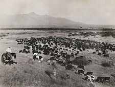 1908/52 Vintage WESTERN COWBOY HORSE Cow Cattle 11x14 Photo Art ~ ERWIN E. SMITH
