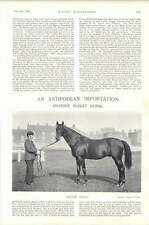 1896 Horse Race Chain Shot New Zealand Import Ayr And Caledonian Hunt Meeting