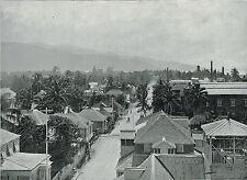 Kingston Jamaica 1899 Antique Print TQE2135