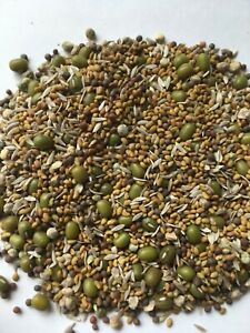 1 pack Microgreens Cascade mix salad sprouts micro green 5 types of seeds