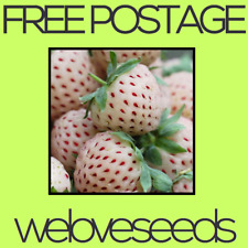 LOCAL AUSSIE STOCK - Pineapple Strawberry, Pineberry Seeds ~10x FREE SHIPPING