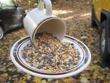 Cup And Saucer Bird Feeder