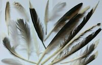 NATURAL FEATHERS x16 SEAGULL LARGE +Medium  FREE fallen feathers UK
