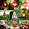Cute Monkey Face 100 Pcs Seeds Orchid Bonsai Plants Flowers Home Garden 2020 NEW