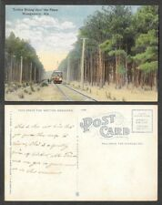 Old Alabama Postcard - Montgomery - Trolley Train Streetcar in the Pines